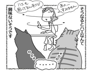 21122016_cat4.jpg