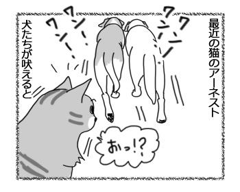 23112016_cat2.jpg