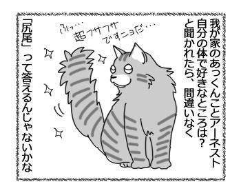 23122016_cat1.jpg