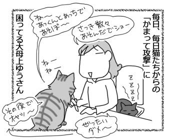 24112016_cat1.jpg