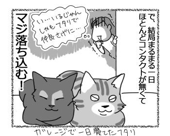 24112016_cat4.jpg