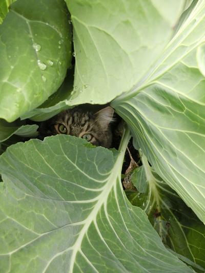 羊の国のビッグフット「猫たち犬たち家庭菜園たち」1