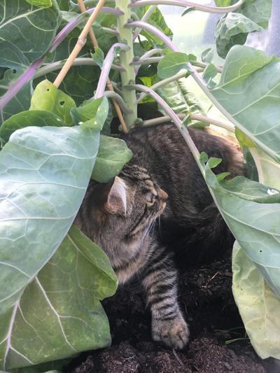 羊の国のビッグフット「猫たち犬たち家庭菜園たち」3