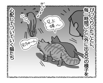 25112016_cat2.jpg