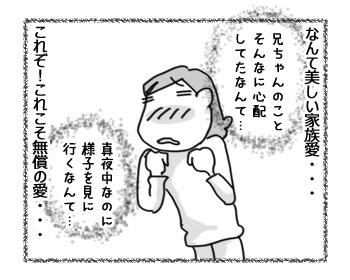 25112016_cat3.jpg