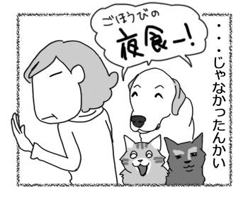 25112016_cat4.jpg