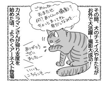 26112016_cat2.jpg