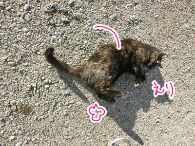 26122016_cat3.jpg