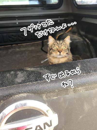 27122016_cat2.jpg