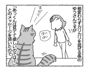 28112016_cat1.jpg