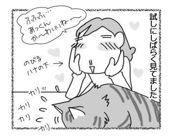 28112016_cat2.jpg