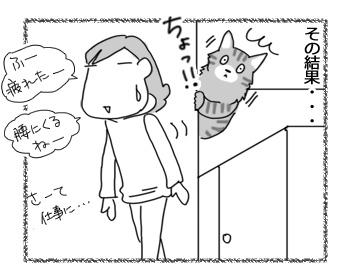 28112016_cat4.jpg