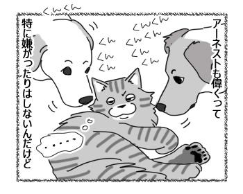 29112016_cat3.jpg