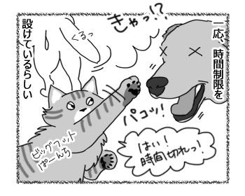 29112016_cat4.jpg