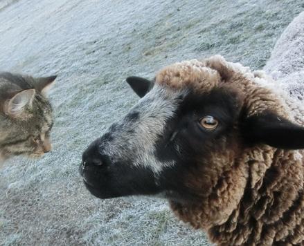 羊の国のビッグフット「家族の協力」3