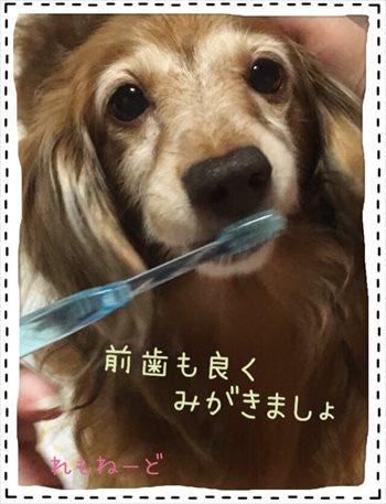 前歯の歯磨き