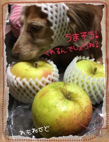 りんご名月1