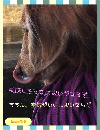 20161120211530c3a.jpg