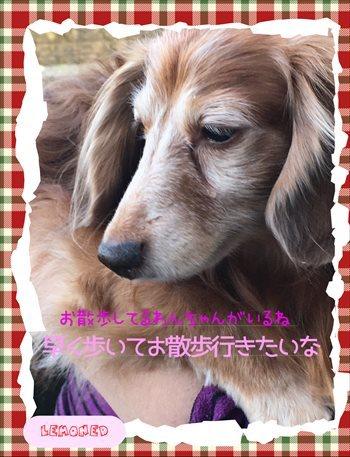 201611202115317c3.jpg