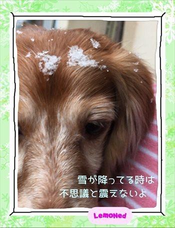2016/11/24初雪 振り始め2