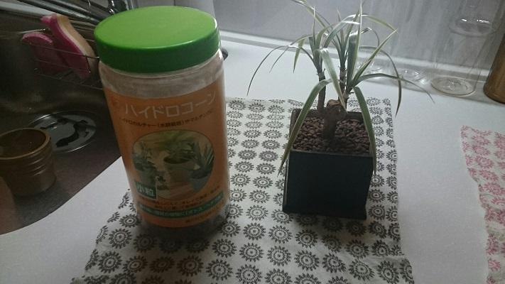 観葉植物②新鉢