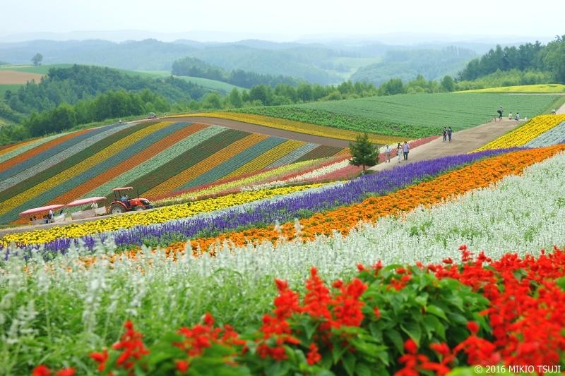 絶景探しの旅 - 0034 四季彩の丘 (北海道 美瑛町)