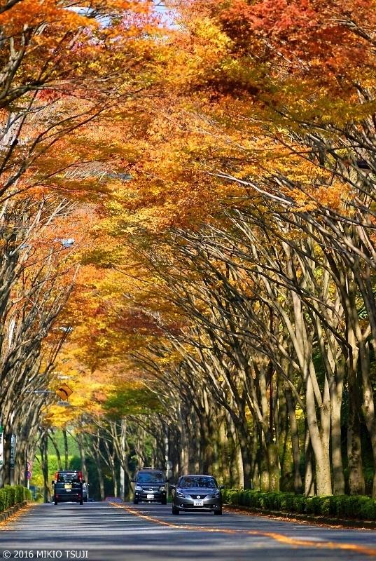 絶景探しの旅 - 0037 紅葉の大アーチ(東京都 八王子市)