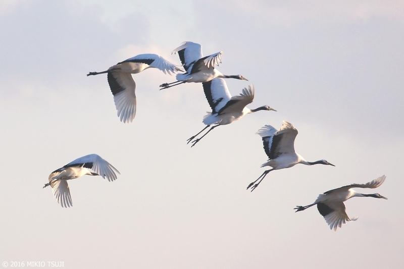 絶景探しの旅 – 0060 タンチョウ空へ (鶴居・伊藤タンチョウサンクチュアリ/ 釧路湿原)