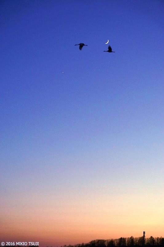 0061 三日月に飛ぶ (鶴居村 釧路湿原)
